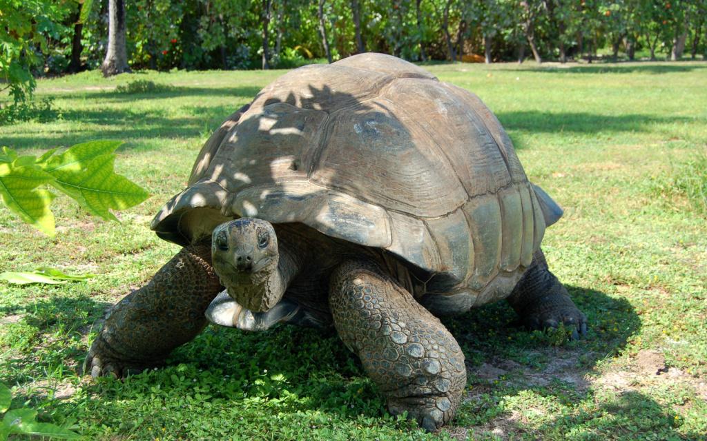 giant tortoise on Silhouette